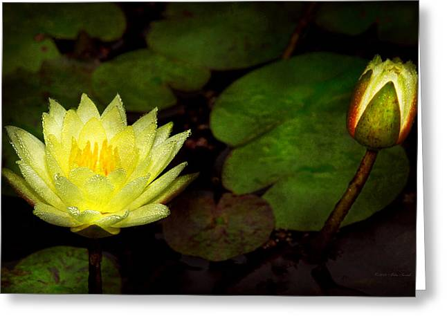 Lilly Pads Greeting Cards - Flower - Lily - Morning showers Greeting Card by Mike Savad