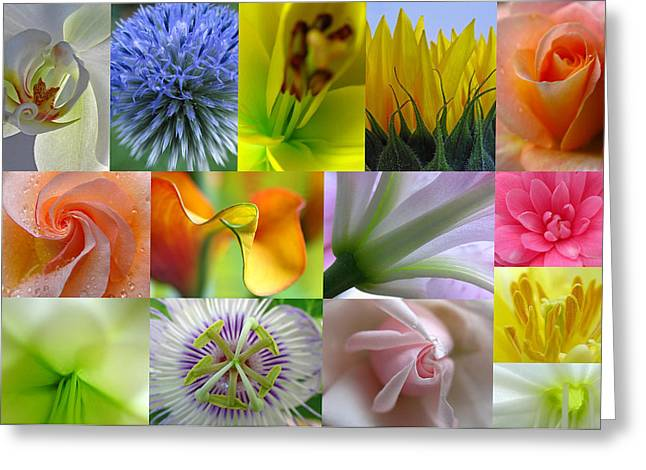 Artwork Flowers Greeting Cards - Flower Macro Photography Greeting Card by Juergen Roth