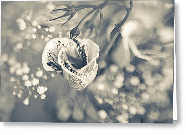 Beauty Mark Photographs Greeting Cards - Flower Greeting Card by Mark-Meir Paluksht