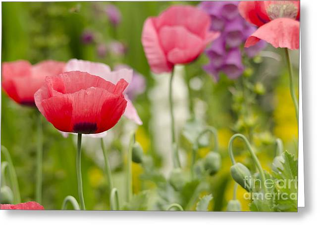 Short-lived Perennial Greeting Cards - Flower Meadow Greeting Card by Darren Wilkes