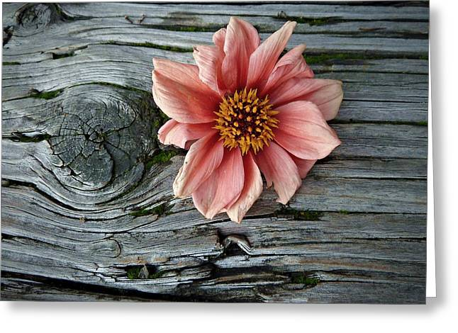 South Puget Sound Greeting Cards - Flower on Wood I Greeting Card by Patricia Strand