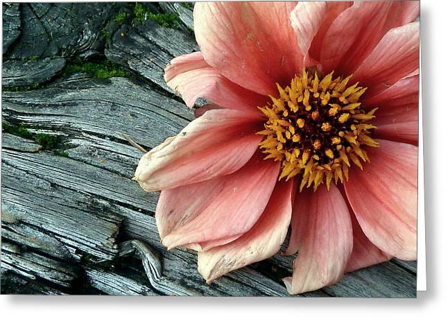 South Puget Sound Greeting Cards - Flower on Wood II Greeting Card by Patricia Strand