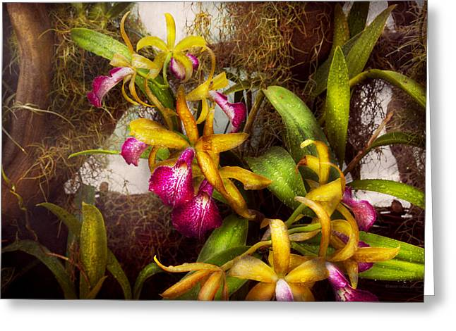 Flower - Orchid - Cattleya - There's Something About Orchids  Greeting Card by Mike Savad