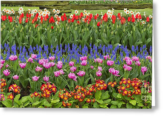 Wet Grass Greeting Cards - Flower panorama Greeting Card by Mark Kiver