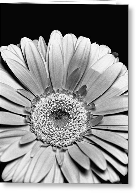 Classic Greeting Cards - Flower Perfection Greeting Card by Marcio Faustino