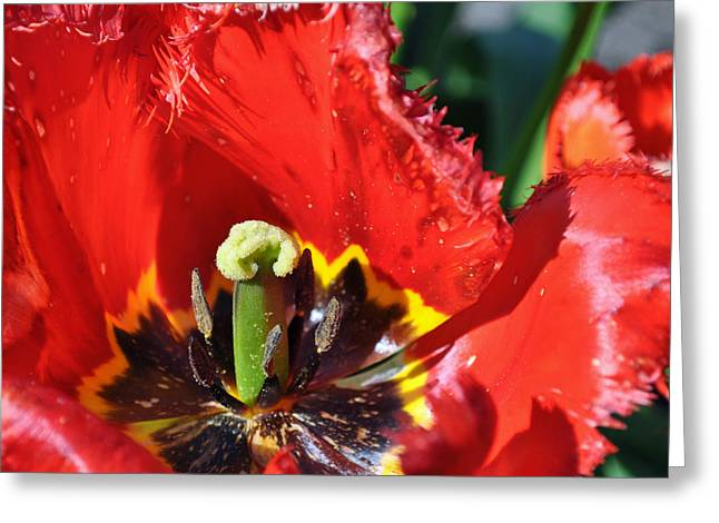 Tacoma Greeting Cards - Flower Pistil in Fort Defiance Park Greeting Card by Bruce Gourley