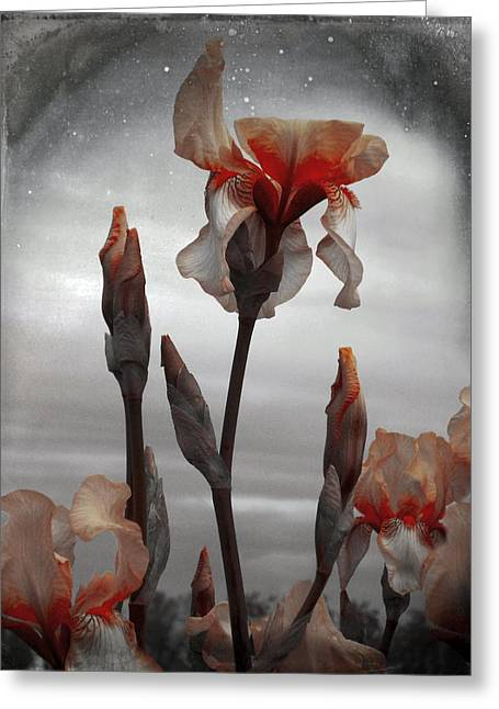 Photograph Of Peaches Greeting Cards - Flower Portrait Greeting Card by Gothicolors Donna Snyder