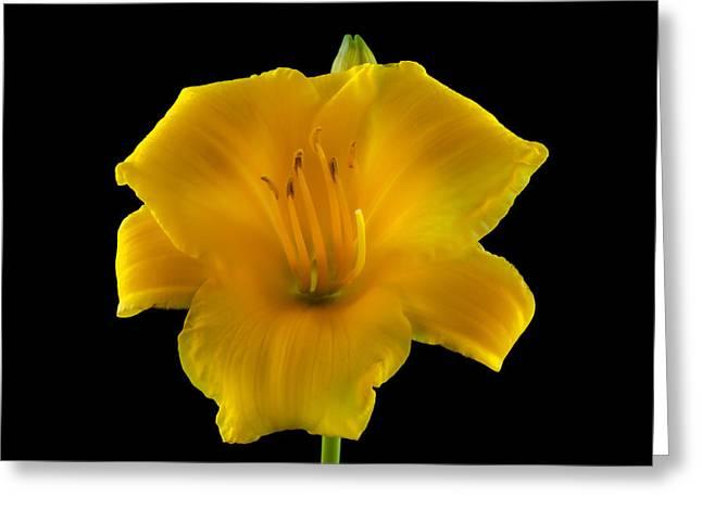 Flower Portrait  Greeting Card by Yasar Ugurlu