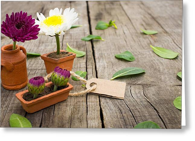 Retailing Greeting Cards - Flower Pots Greeting Card by Aged Pixel