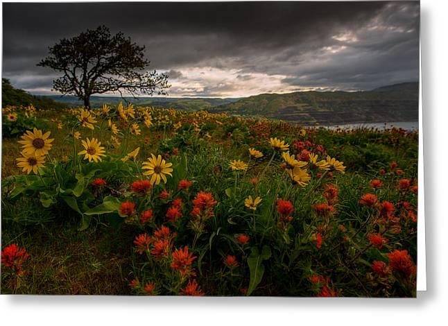 Balsam Greeting Cards - Flower Power Greeting Card by Dan Mihai