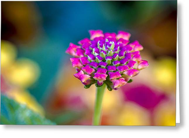 Delicate Bloom Greeting Cards - Flower Power Greeting Card by Teri Virbickis