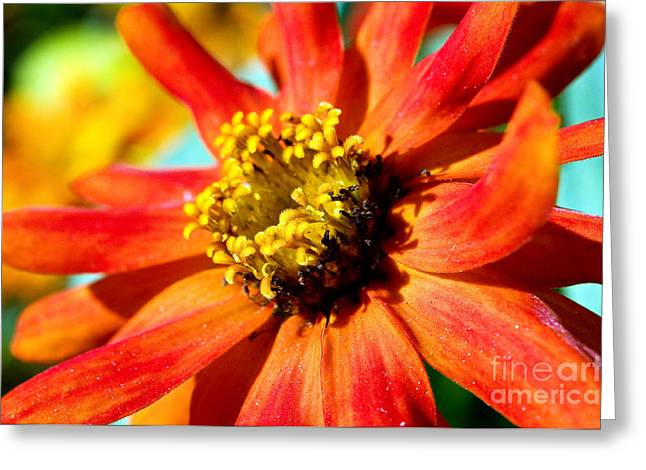 Macro Flower Photography Greeting Cards - Flower Power Greeting Card by Terry Elniski