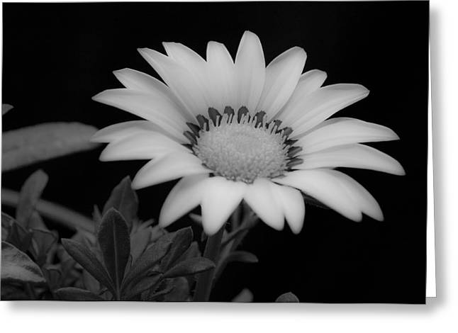 Close Focus Floral Greeting Cards - Flower  Greeting Card by Ron White