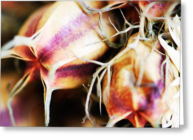 Get Well Card Framed Prints Greeting Cards - Flower Rust Greeting Card by Andrada Anghel