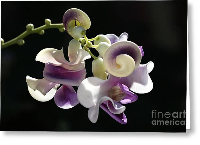 Joy Watson Greeting Cards - Flower-snail Flower Greeting Card by Joy Watson
