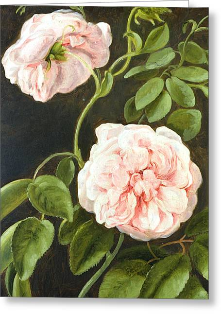 Roses In Bud Greeting Cards - Flower Study Greeting Card by Johann Friedrich August Tischbein