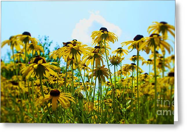 Gold Leave Greeting Cards - Flower - Sunflower Worshipers - Luther Fine Art Greeting Card by Luther   Fine Art