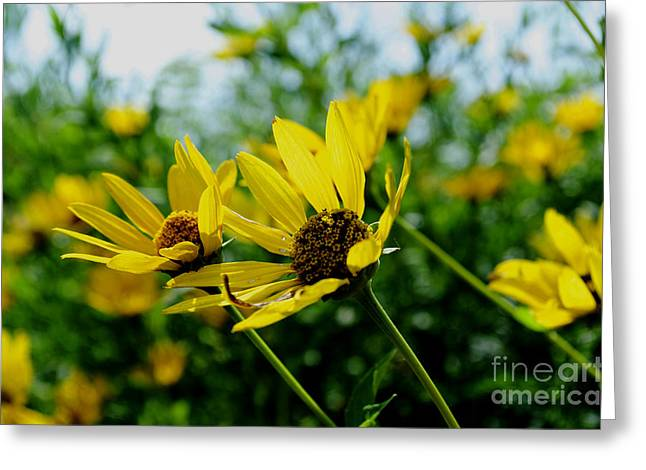 Gold Leave Greeting Cards - Flower - Sunning Sunflowers - Luther Fine Art Greeting Card by Luther  Fine Art