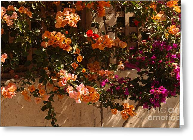 Trellis Photographs Greeting Cards - Flower Trellis in La Jolla Greeting Card by Anna Lisa Yoder