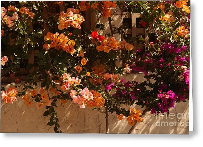 Flower Trellis in La Jolla Greeting Card by Anna Lisa Yoder