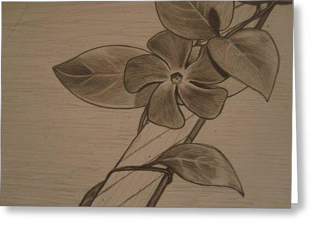 Holding Flower Drawings Greeting Cards - Flower Vine Greeting Card by MaryEllen Frazee