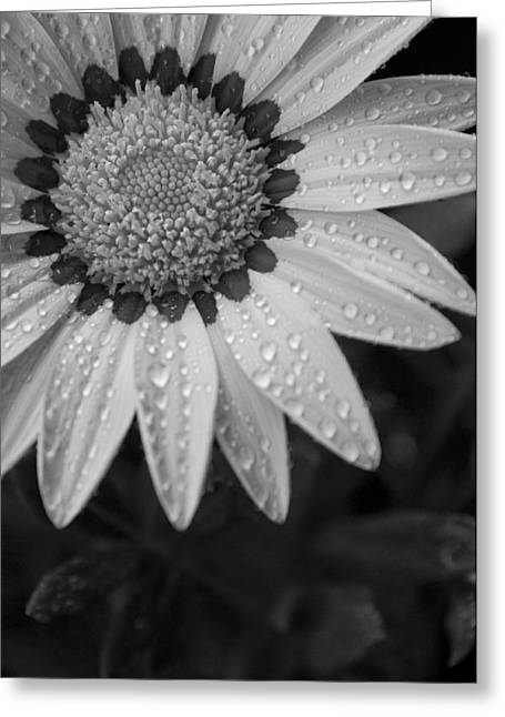Flower Water Droplets Greeting Card by Ron White