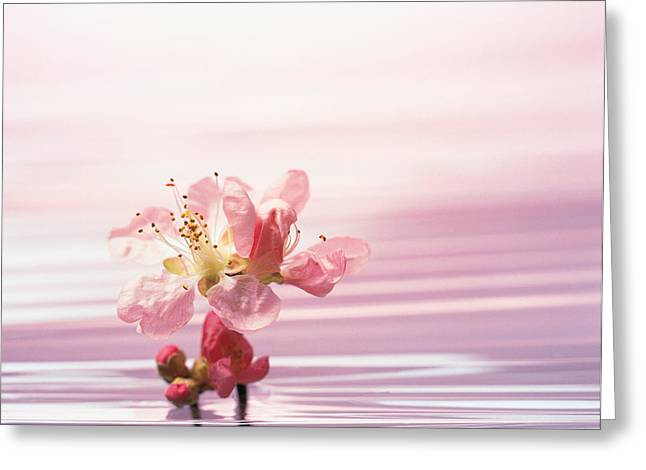 Focus On Foreground Greeting Cards - Flower With Water Background Greeting Card by Panoramic Images