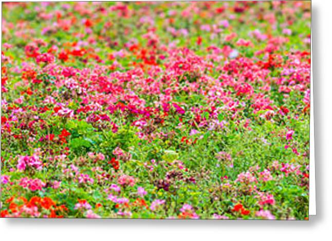 Organic Greeting Cards - Flowerbed Panorama Long - Featured 3 Greeting Card by Alexander Senin