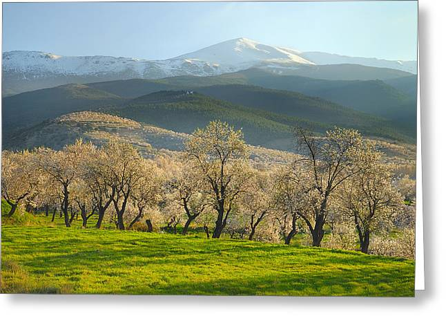 Flowering Almond At The Mountains Greeting Card by Guido Montanes Castillo