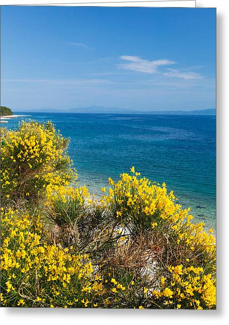 Adriatic Sea Greeting Cards - Flowering Broom At Coastal Landscape Greeting Card by Panoramic Images