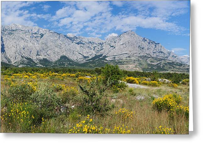 Panorama Mountain Images Greeting Cards - Flowering Broom, Biokovo Mountain Greeting Card by Panoramic Images