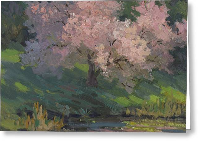 Pink Blossoms Greeting Cards - Flowering Cherry Greeting Card by Diane McClary