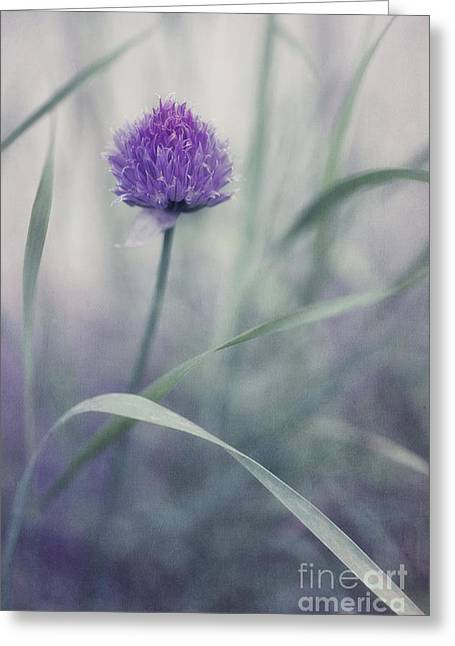 Macro Flower Photography Greeting Cards - Flowering Chive Greeting Card by Priska Wettstein