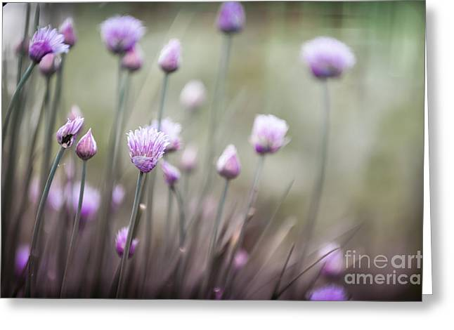 Chives Greeting Cards - Flowering chives II Greeting Card by Elena Elisseeva
