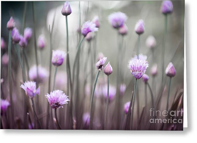 Flowering Chives Iv Greeting Card by Elena Elisseeva