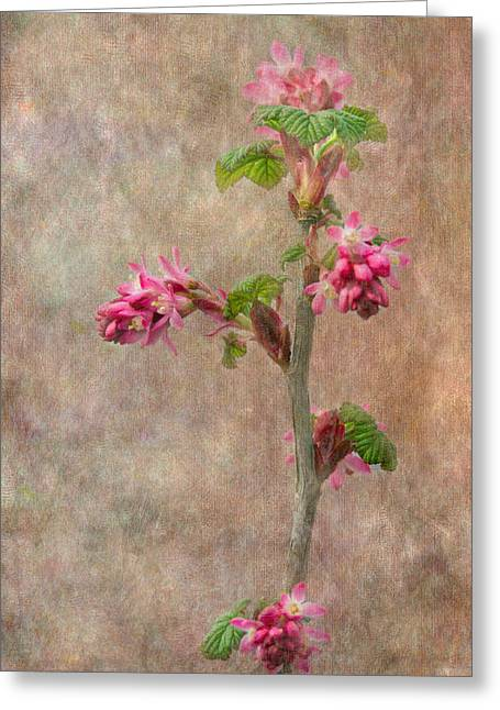 Flowering Currant Greeting Card by Angie Vogel