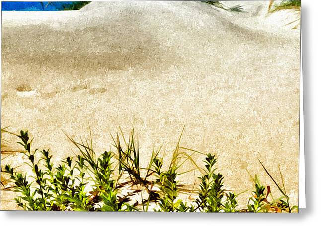 Flowering Dunes - Outer Banks Greeting Card by Dan Carmichael