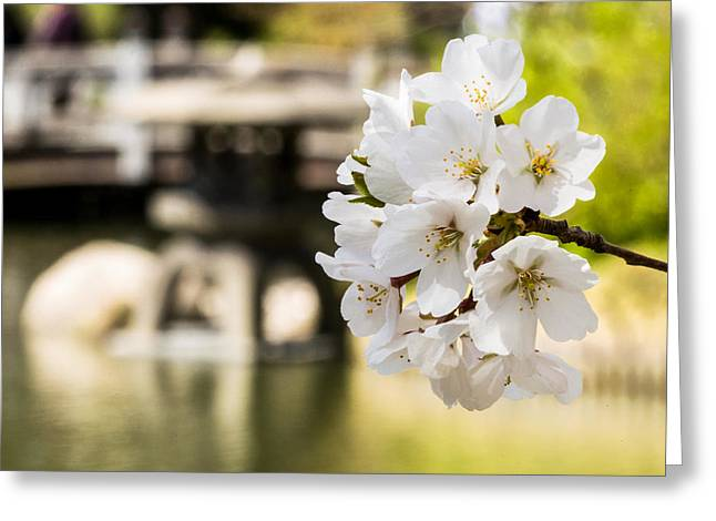 Full Bloom Greeting Cards - Flowering in Front of the Pagoda Greeting Card by David Hahn