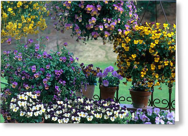 Hanging Planter Greeting Cards - Flowering Potted Plants Greeting Card by Hans Reinhard