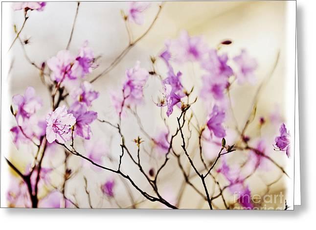 Flowering rhododendron Greeting Card by Elena Elisseeva