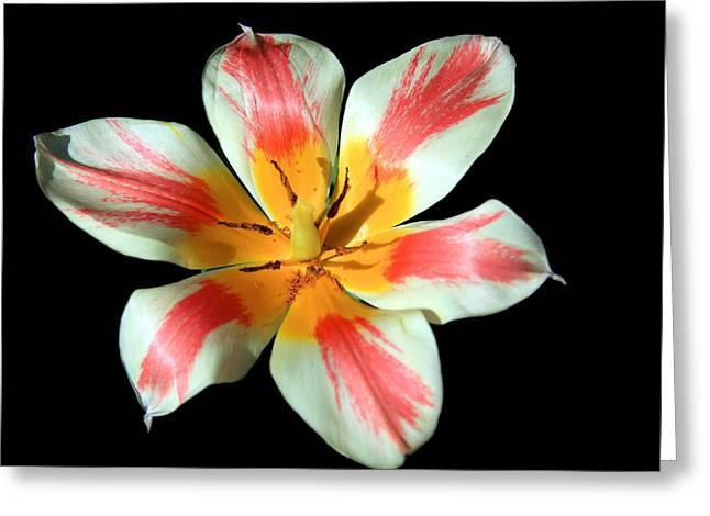 Pink Flower Prints Greeting Cards - Flowering Splendor Greeting Card by Aidan Moran