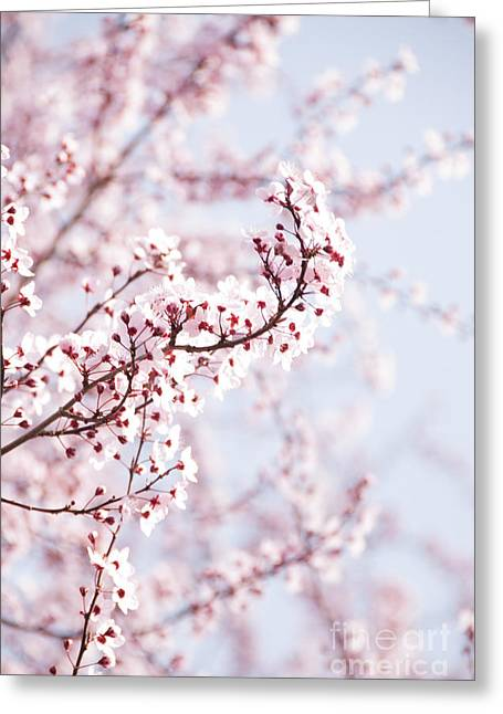 Pink Flower Branch Greeting Cards - Flowering Tree in Spring Greeting Card by Juli Scalzi