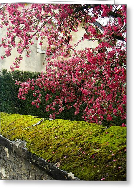 Geobob Greeting Cards - Flowering Trees and Moss Covered Old Walls Beaune Saone et Loire Burgundy France Greeting Card by Robert Ford