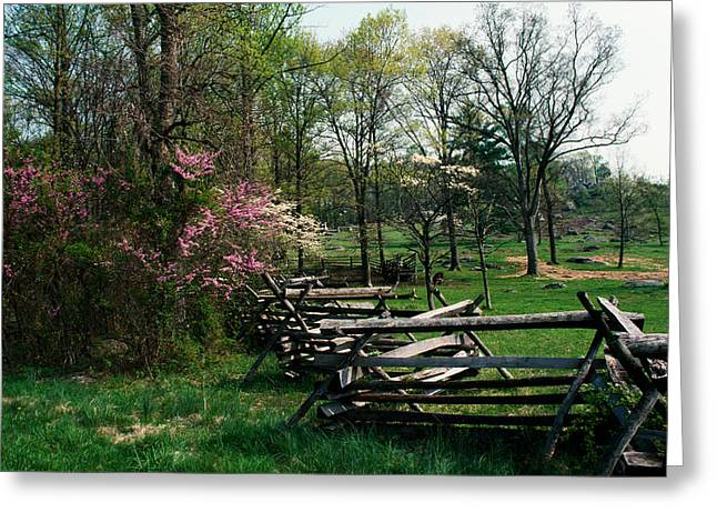 Fence Line Greeting Cards - Flowering Trees In Bloom Along Fence Greeting Card by Panoramic Images