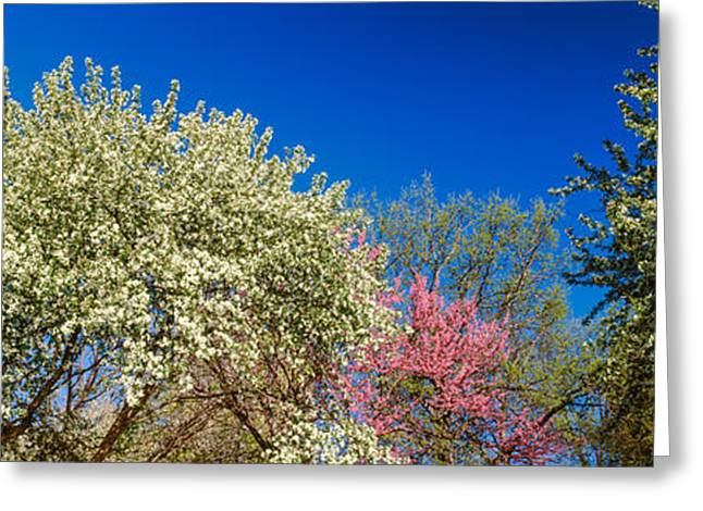 Botany Greeting Cards - Flowering Trees In Bloom, St. Louis Greeting Card by Panoramic Images