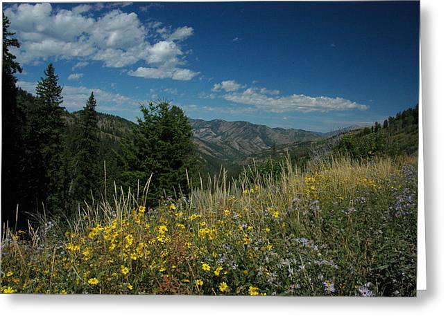Flowering Yellowstone Greeting Card by Larry Moloney