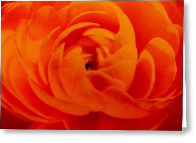Gay Art Framed Giclee On Canvas Greeting Cards - Flowers  1 Greeting Card by Gunter  Hortz