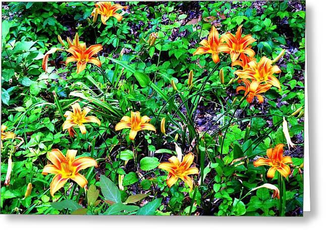Flowers 2 Greeting Card by Dietrich ralph  Katz