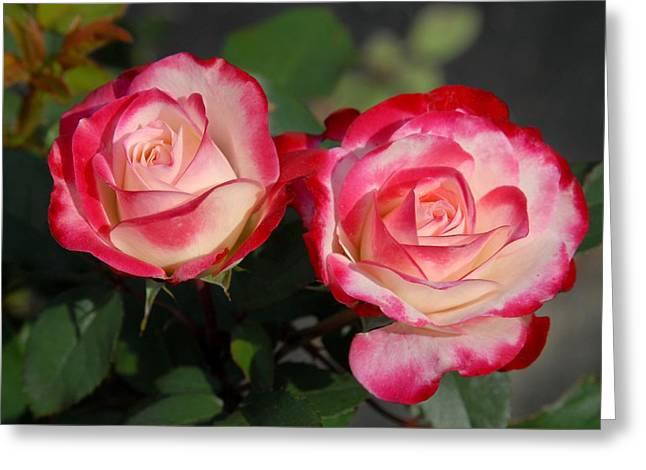 Roses Greeting Cards - Flowers 451 Greeting Card by Joyce StJames