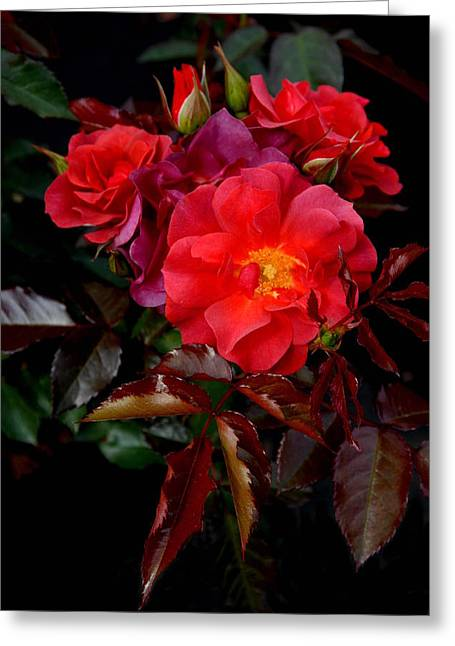 Roses Greeting Cards - Flowers 504 Greeting Card by Joyce StJames